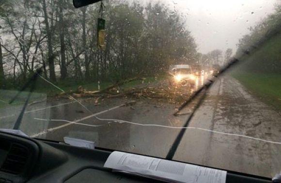 Буревій повалив дерева thumbnail