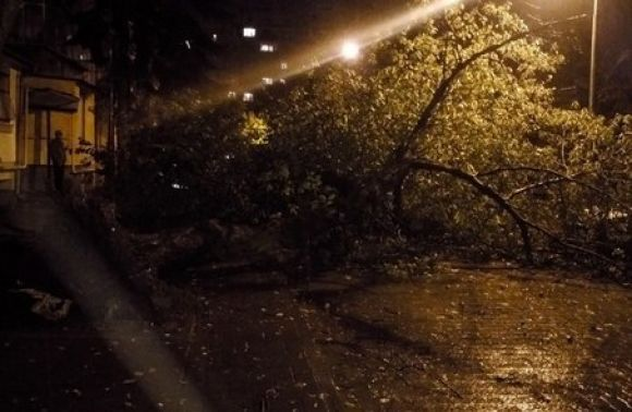 Біля Львова намашину впало дерево і травмувало пасажирку