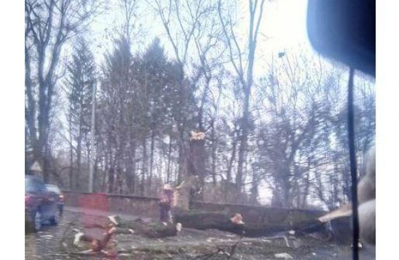 Навул. Стрийській дерево впало напозашляховик