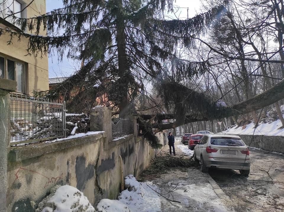 У Львові впало дерево: автомобілю пощастило