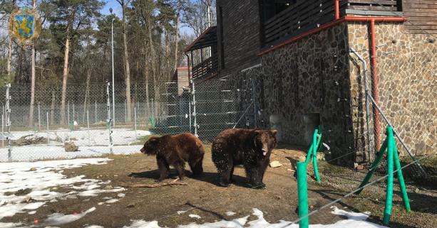 Вісім нових ведмедів привезуть у притулок